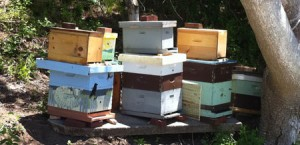 Bee boxes ate Truro Center for the Arts at Castle Hill
