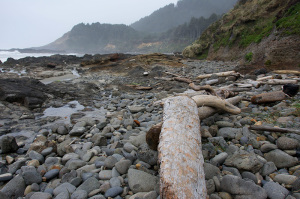 Looking for driftwood in Yachats, Oregon