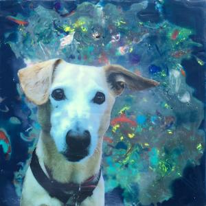 Wax & Wine Pet Portrait Collage Class in Bend, Oregon